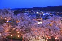 津山城・鶴山公園のサクラと津山市街夜景