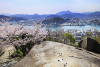 千光寺公園 鼓岩とサクラ 尾道水道と向島