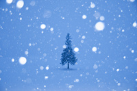 クリスマスツリーの木と降雪 11076017843| 写真素材・ストックフォト・画像・イラスト素材|アマナイメージズ