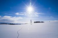 雪原に続く狐の足跡と太陽 11076017855  写真素材・ストックフォト・画像・イラスト素材 アマナイメージズ