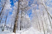 霧氷の森と道 11076017868| 写真素材・ストックフォト・画像・イラスト素材|アマナイメージズ