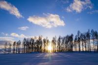 カラマツ林に沈む夕日 11076017872| 写真素材・ストックフォト・画像・イラスト素材|アマナイメージズ