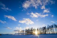 カラマツ林に沈む夕日 11076017873  写真素材・ストックフォト・画像・イラスト素材 アマナイメージズ