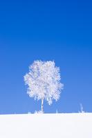 霧氷の木々 11076017885  写真素材・ストックフォト・画像・イラスト素材 アマナイメージズ