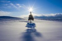 雪原にクリスマスツリーの木と夕日