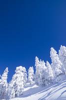 十勝岳温泉の樹氷林 11076017914| 写真素材・ストックフォト・画像・イラスト素材|アマナイメージズ