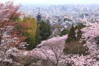 八坂の塔とサクラ 京都市街を望む