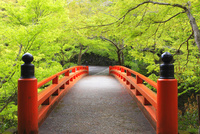 指月橋と新緑