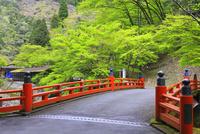 高野橋と新緑