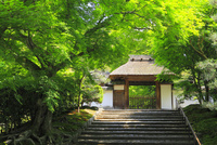 新緑の安楽寺山門