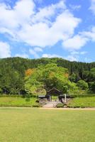 越前・一乗谷朝倉氏遺跡の新緑
