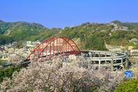 音戸大橋とサクラ