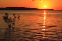 沖縄西表島 前良川のマングローブと朝日に染まる海 11076019426  写真素材・ストックフォト・画像・イラスト素材 アマナイメージズ