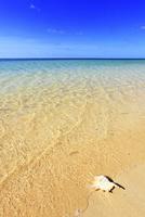 沖縄西表島 南風見田の浜と海に貝殻