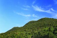 沖縄西表島 原生林の森