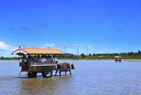 沖縄西表島 由布島の水牛車