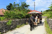 沖縄竹富島 ブーゲンビリアの道と水牛車