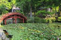 朝熊山・金剛證寺 連間の池のハス