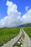 立山黒部・弥陀ヶ原 遊歩道と入道雲