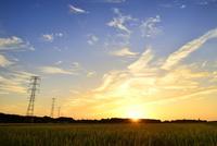 夕日と送電線に田んぼ