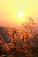 ススキと夕日 11076020312| 写真素材・ストックフォト・画像・イラスト素材|アマナイメージズ