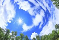 緑の木々と太陽に雲
