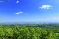 扇ヶ原展望台から望む新緑と十勝平野