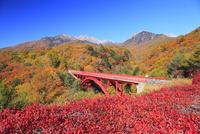 清里高原 紅葉の東沢橋と八ヶ岳 11076021078| 写真素材・ストックフォト・画像・イラスト素材|アマナイメージズ