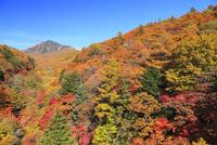清里高原の紅葉と八ヶ岳 11076021084| 写真素材・ストックフォト・画像・イラスト素材|アマナイメージズ