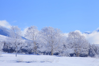 霧ヶ峰高原 霧氷と青空 11076021127| 写真素材・ストックフォト・画像・イラスト素材|アマナイメージズ