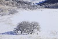 霧ヶ峰高原 池のくるみの霧氷 11076021129| 写真素材・ストックフォト・画像・イラスト素材|アマナイメージズ
