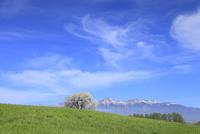 野辺山高原 ヤマナシの木と八ヶ岳