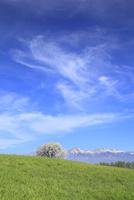 野辺山高原 ヤマナシの木と八ヶ岳 11076021187| 写真素材・ストックフォト・画像・イラスト素材|アマナイメージズ