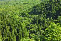 鍵掛峠より望む新緑の山肌