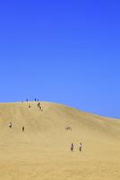 鳥取砂丘 11076021507| 写真素材・ストックフォト・画像・イラスト素材|アマナイメージズ