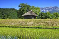 茅葺小屋と新緑の大山