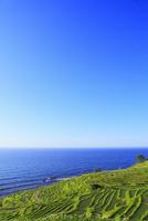 初夏の白米千枚田 11076021692| 写真素材・ストックフォト・画像・イラスト素材|アマナイメージズ