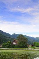 初夏の白川郷