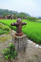 夏の白川郷 消火栓と水田