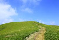 美ヶ原高原 緑の草原と一本の道