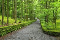 軽井沢別荘地 石畳の道と緑