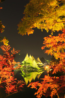 紅葉の兼六園ライトアップ 11076022176| 写真素材・ストックフォト・画像・イラスト素材|アマナイメージズ