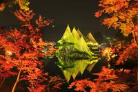 紅葉の兼六園ライトアップ 11076022177  写真素材・ストックフォト・画像・イラスト素材 アマナイメージズ