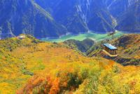 立山黒部 大観峰より紅葉のタンボ平と黒部湖・立山ロープウェイ