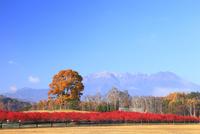 開田高原 木曽馬の里の紅葉と御嶽山