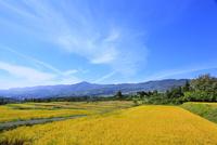 稲田の実りと山並み