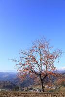 柿と集落に北アルプス