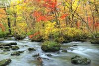 奥入瀬渓流・三乱の流れと紅葉