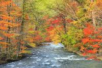 奥入瀬渓流と紅葉