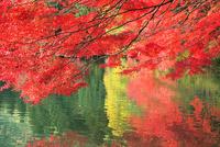 紅葉の葉と湖面 11076022414| 写真素材・ストックフォト・画像・イラスト素材|アマナイメージズ